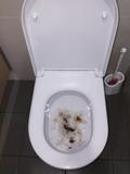 toilet hd 62 pics