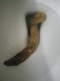 Toilet pooping